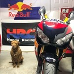 Production (Stock) Honda CBR1000RR, a person sitting on a motorcycle with a dog a person sitting on a Honda CBR1000RR Sportbike with a dog